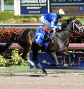 Betting the Opening Weekend of Horse Races at Gulfstream Park